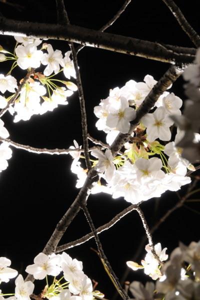 MOM_9602.jpg